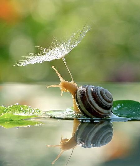 Photos of Snails
