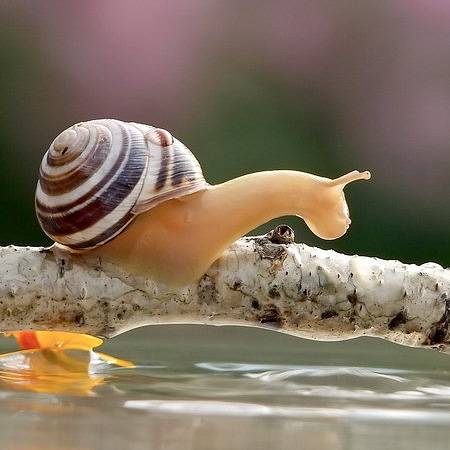 Creative Photos of Snails