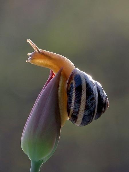 Vyacheslav Mishchenko Snail Photography