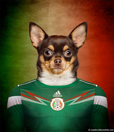 Soccer Nations Dogs