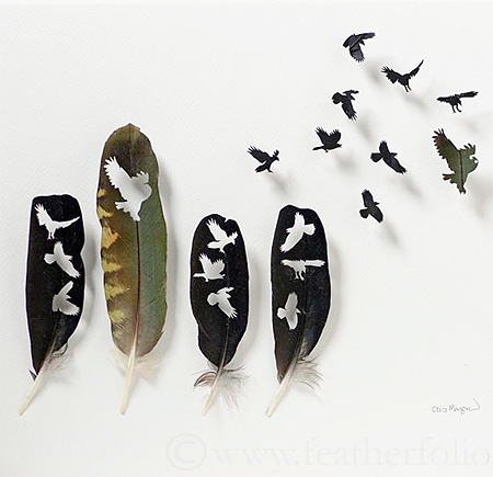 Feather by Chris Maynard