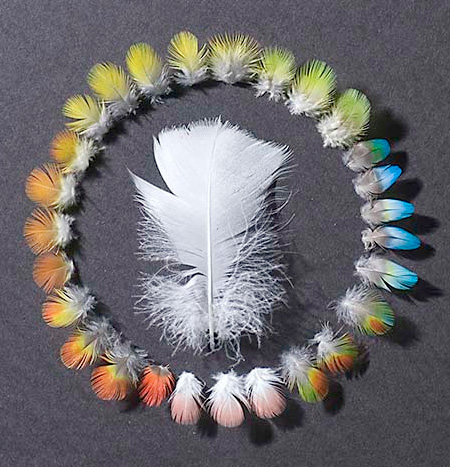 Feather Shadowboxes