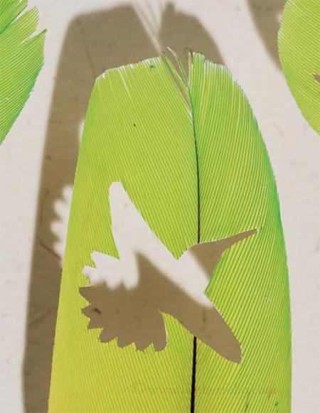 Feather Dioramas