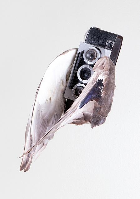 Camera Bird