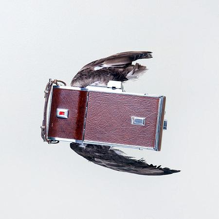 Paul Octavious Camera Birds