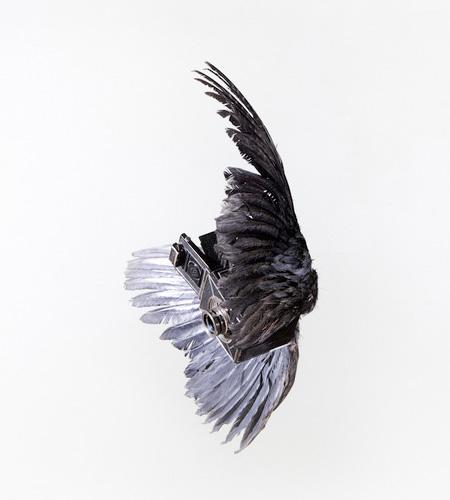 Paul Octavious Camera Bird
