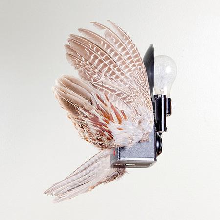 Paul Octavious Birds Of Aperture
