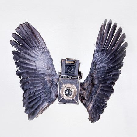 Paul Octavious Bird Of Aperture