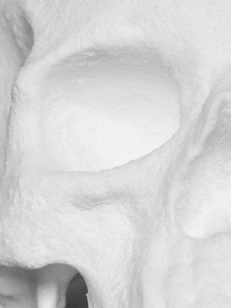Diddo Skull