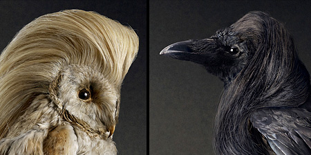 Stylish Birds
