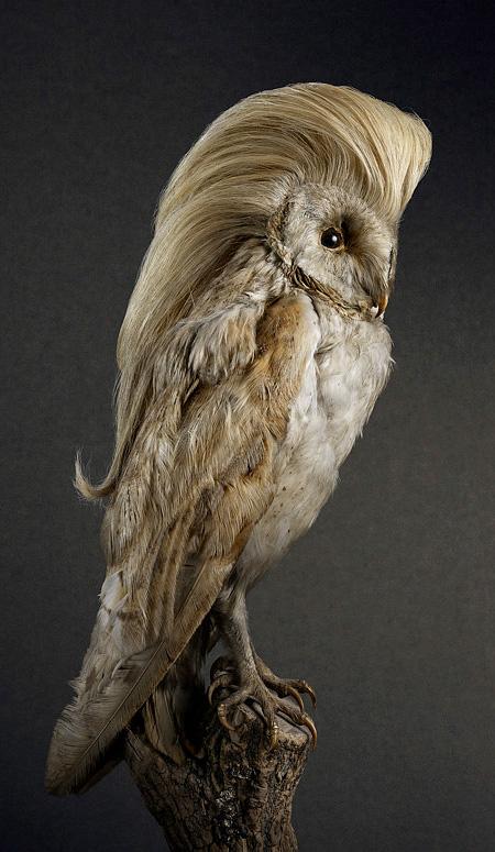 Stylish Bird