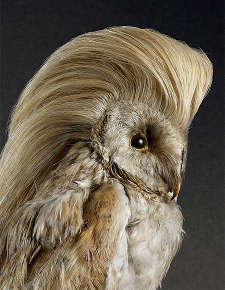 Bird Hairstyle