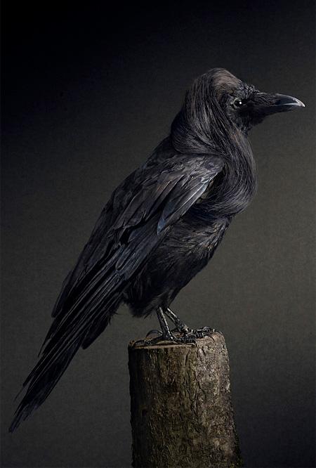 Bird Hairstyles