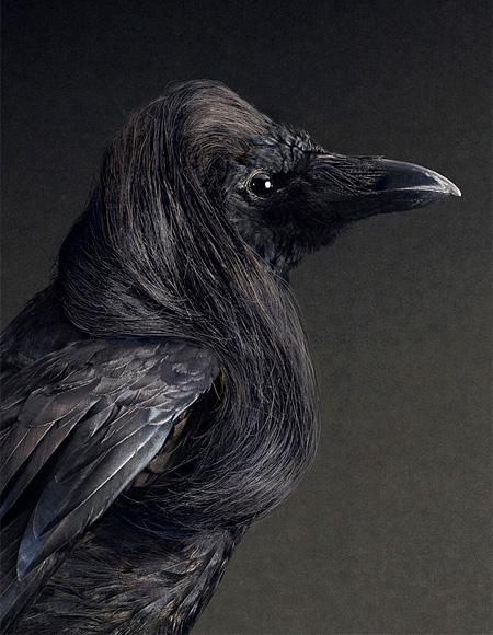 Coiffure le Bird