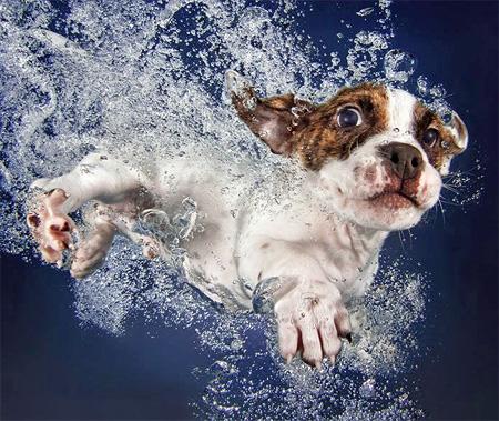 Underwater Puppy