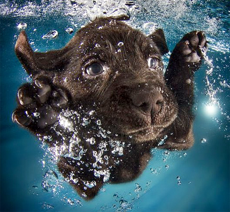 Swimming Doggies
