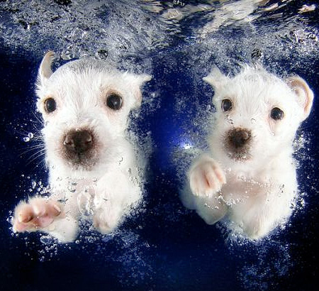 Underwater Doggies by Seth Casteel