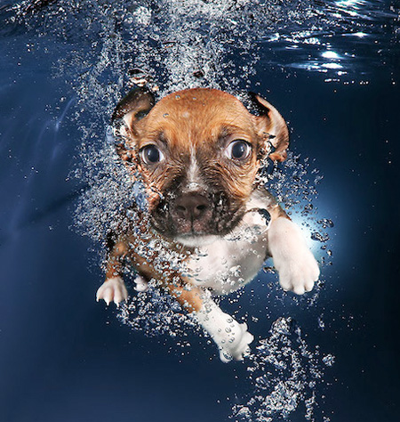 Seth Casteel Underwater Doggies