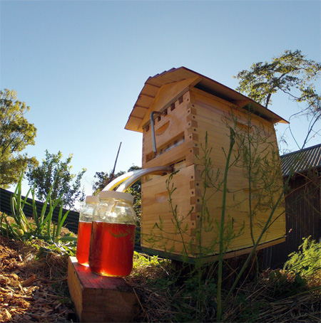 Flow Hive Honey on Tap