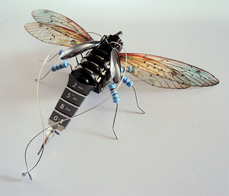 Julie Alice Chappell Insects