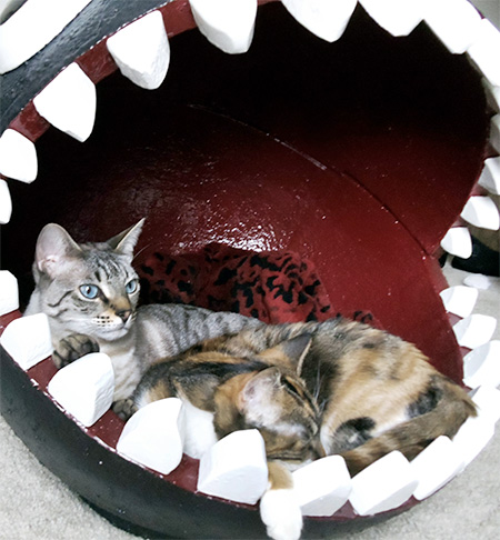 Catastrophic Creations Chain Chomp Cat Bed