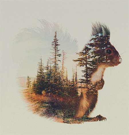 Double Exposure Animal by Andreas Lie