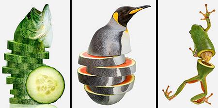 Animal Food Hybrids