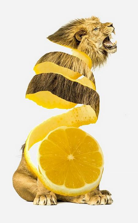 Sarah DeRemer Animal Food