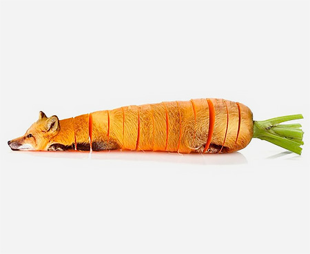 Carrot Fox