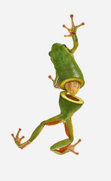 Frog Avocado