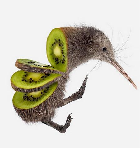 میکس حیوانات و میوه ها
