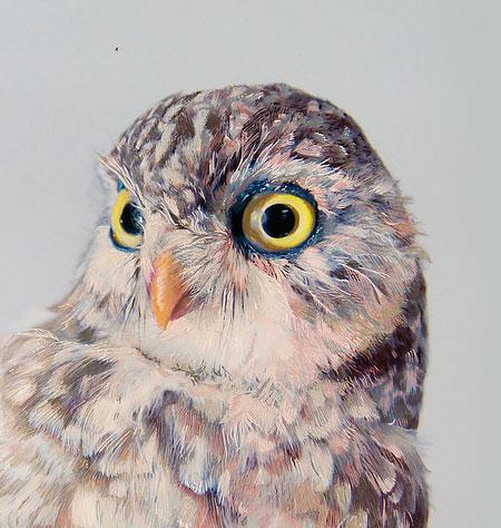 John Pusateri Owl