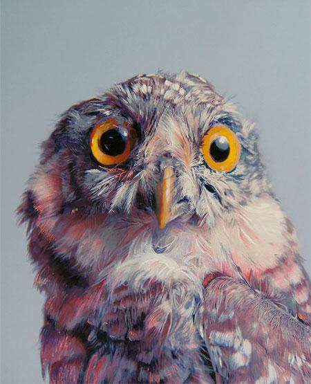 John Pusateri Owl Drawings