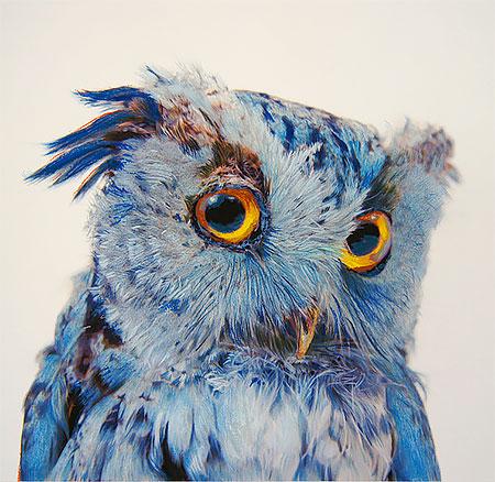 Owl Paintings by John Pusateri