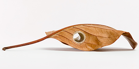 Leaf Art by Susanna Bauer