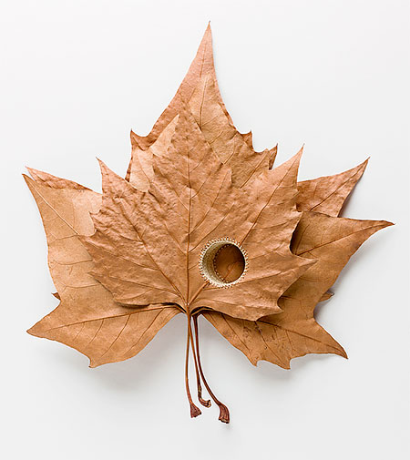 3D Leaf Art by Susanna Bauer