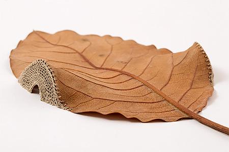 3D Leaf Art