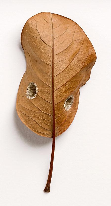 Leaf Sculptures by Susanna Bauer