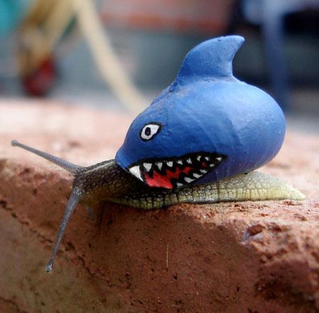 Shark Snail