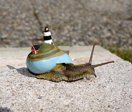 Isle Snail
