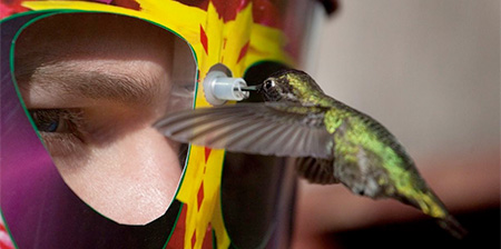 Wearable Hummingbird Feeder