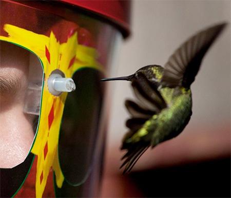 Hummingbird Feeder Mask