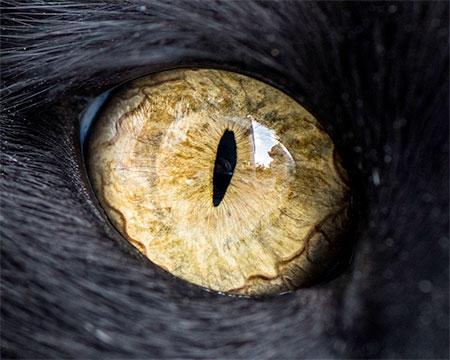 Wolfblaze Avatar