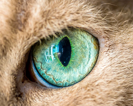 Macro Photos of Cat Eyes
