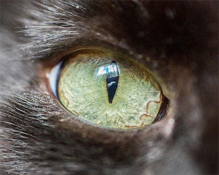 Macro Photos of Cats