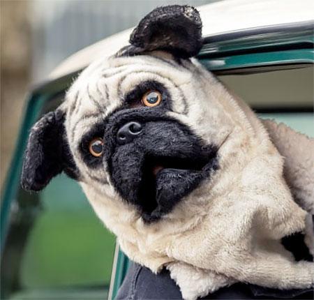 Pug Dog Costume