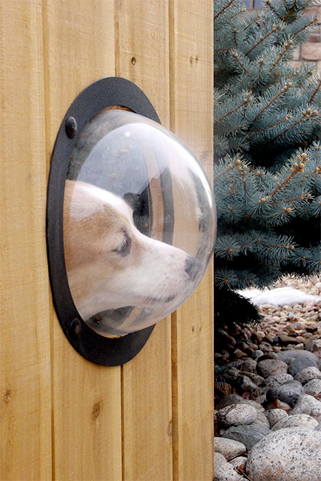 Window for Your Dog