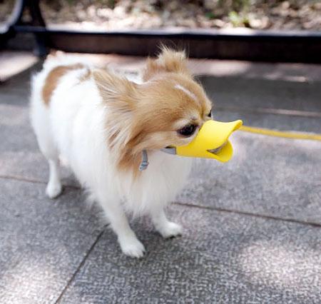 Duck Dog Muzzle