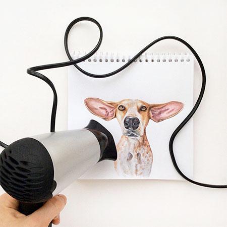 Interactive Dog Drawings