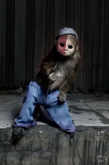 Monkey Wearing Doll Mask